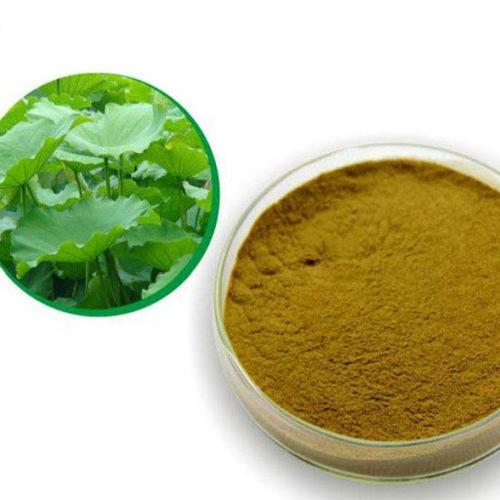 Lotus Leaf Extract (Folium Nelumbinis Extract)