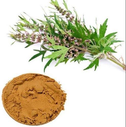 Motherwort Extract (Leonurus Heterophyllus Sweet Extract)