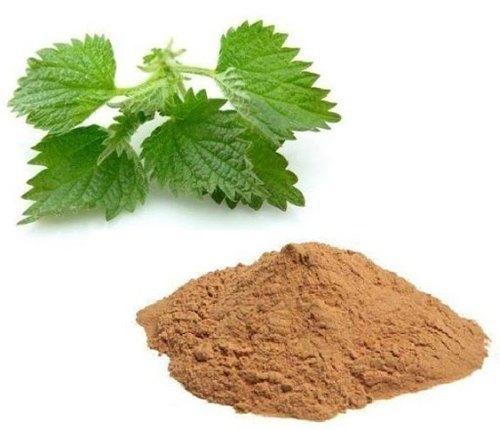 Nettle Leaf Extract ( Stinging Nettle Extract )
