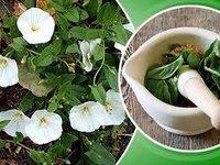 Shankhpushpi Herbs