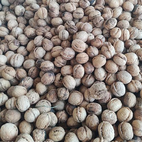 Best Quality Raw Walnuts
