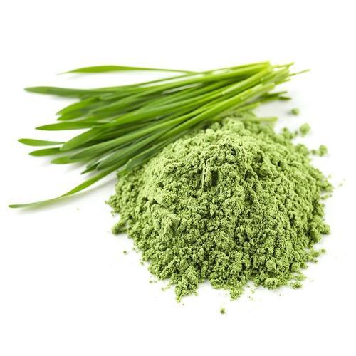 Wheat Grass Powder (Thinopyrum Intermedium Extract)