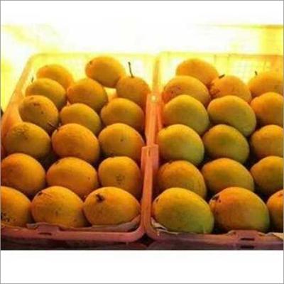 Fresh Alphonos Mango