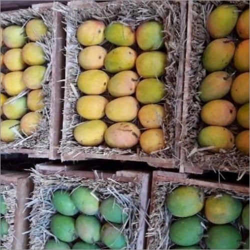 Pure Alphonos Mango