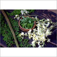 Moringa Dry Flower