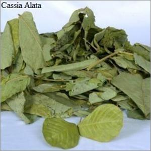Cassia Alata Leaves
