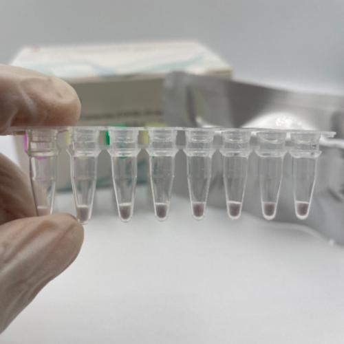 Freeze-dried Novel Coronavirus (COVID-19) Nucleic Detection Kit (Fluorescence PCR method)
