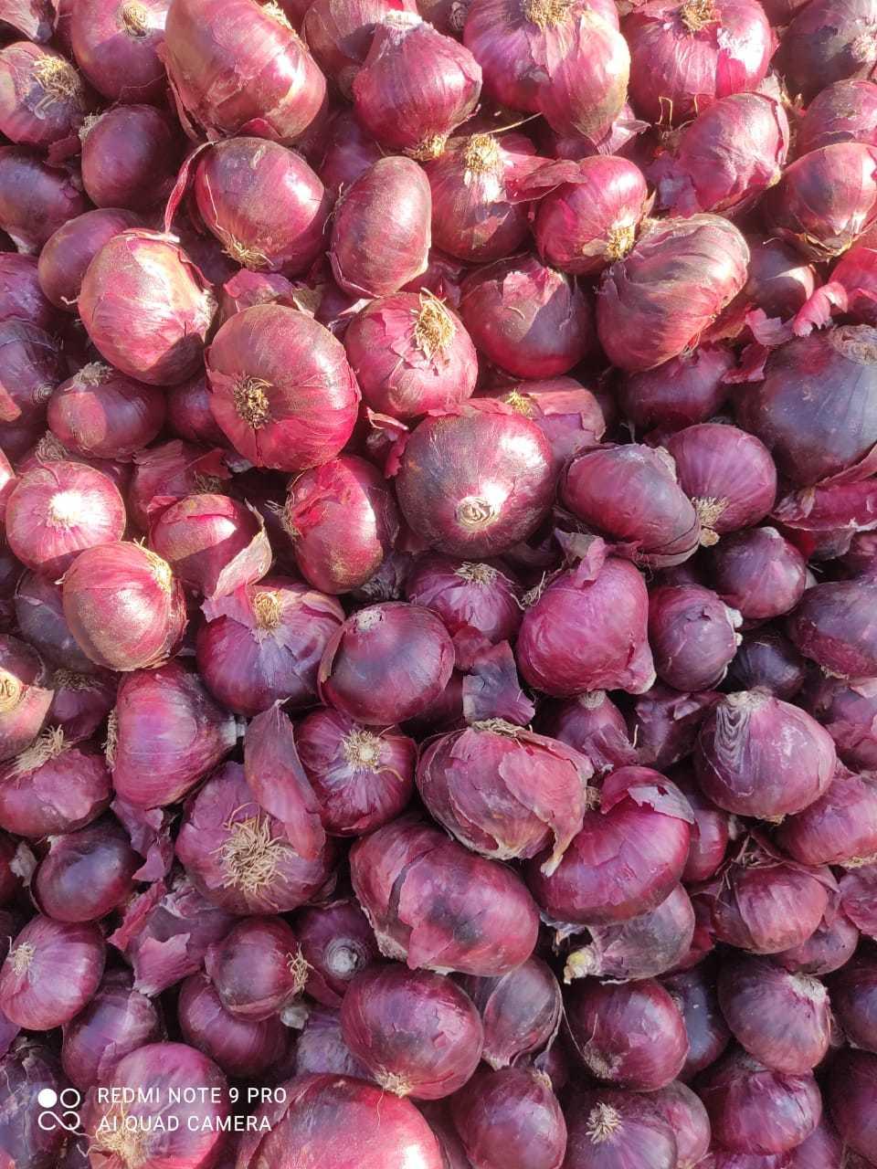 Onion Good Quality(Large)