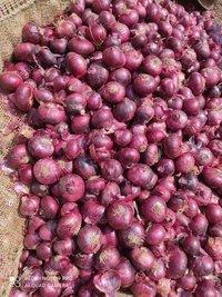 Onion- Medium Quality(Large)