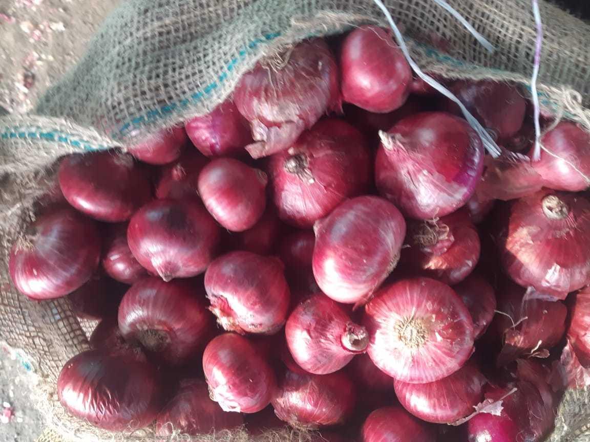 Onion Super quality(Large)
