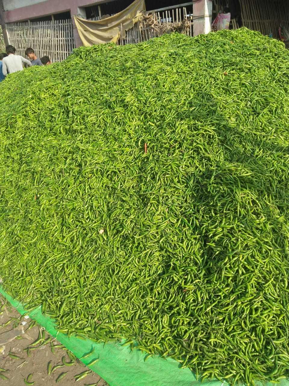 Green Chilli G4 Macro