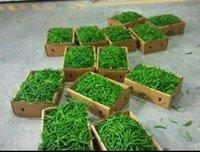 Green Chilli- G4 Super