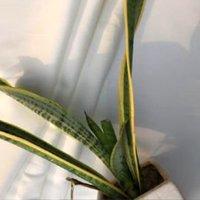 100% Bamboo Fabric (WOVEN)