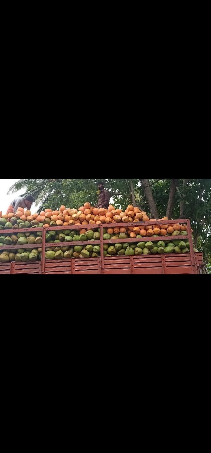 Orange Tender Coconut