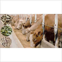 Cattle Feed For Cow