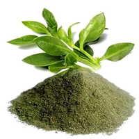 Kalmegh Powder