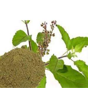 Tulsi Leaves Powder Normal