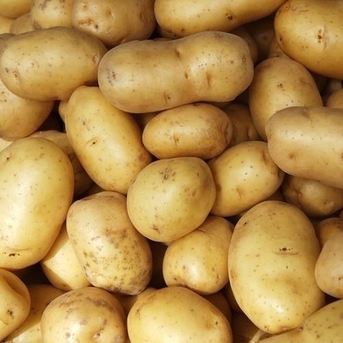 Premium Grade Fresh Potatoes