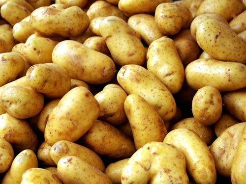 Best Quality Fresh Irish Potatoes