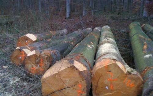 European Beech Logs And Sawn Timber Lumber Kd
