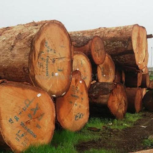 Doussie Logs/ Tali / Azobe / Rosewood / Pine Logs