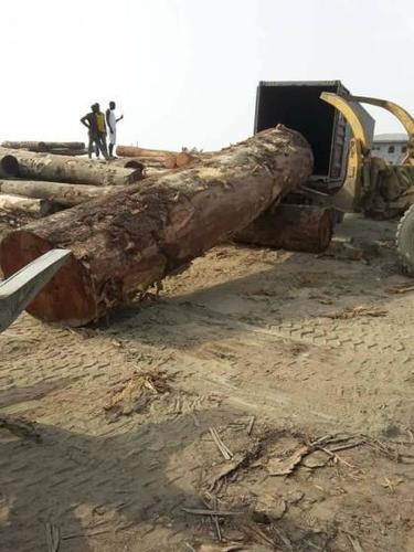 Tali Wood Logs Azobe Wood Logs Rosewood Logs.
