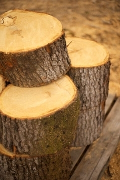 Pine Fire Wood For Sale