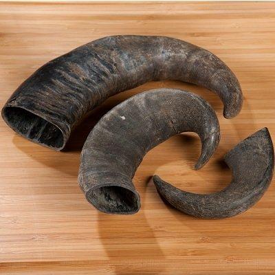 Cow/ Buffalo Horns