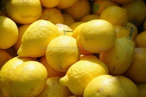 Citrus Fruit Lemon For Sale