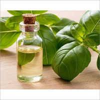 Basil Oil (Ocimum Basilicum)