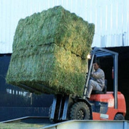 Alfalfa Hay Available
