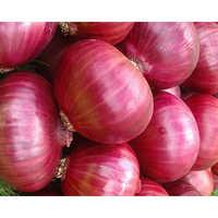Pink Onions