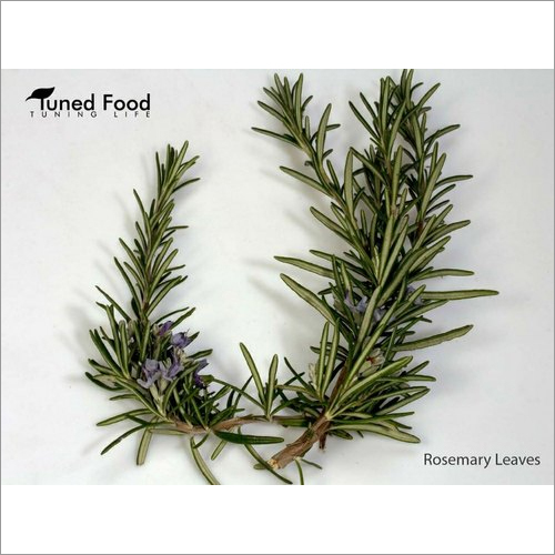 Dry Rosamary Leaves Herbs