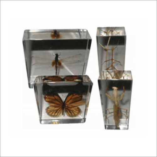 Real Life Science Specimens Insect Set