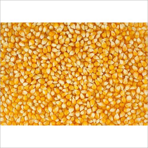 Corns Seeds