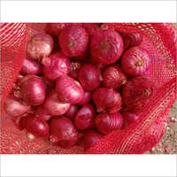 Natural Onion