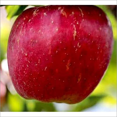 Red Royal Apple
