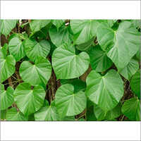 Giloy Leaves
