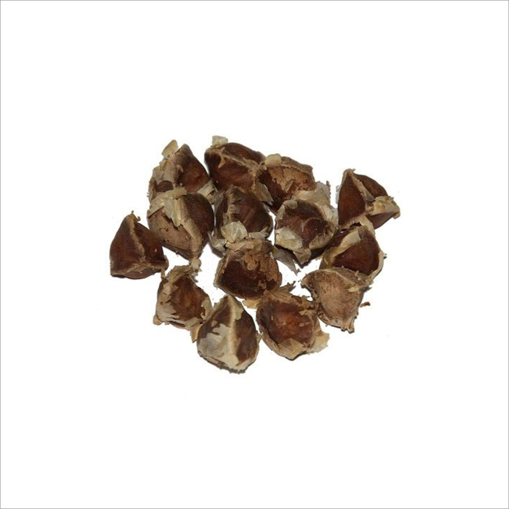 Organic Drumstick Seeds