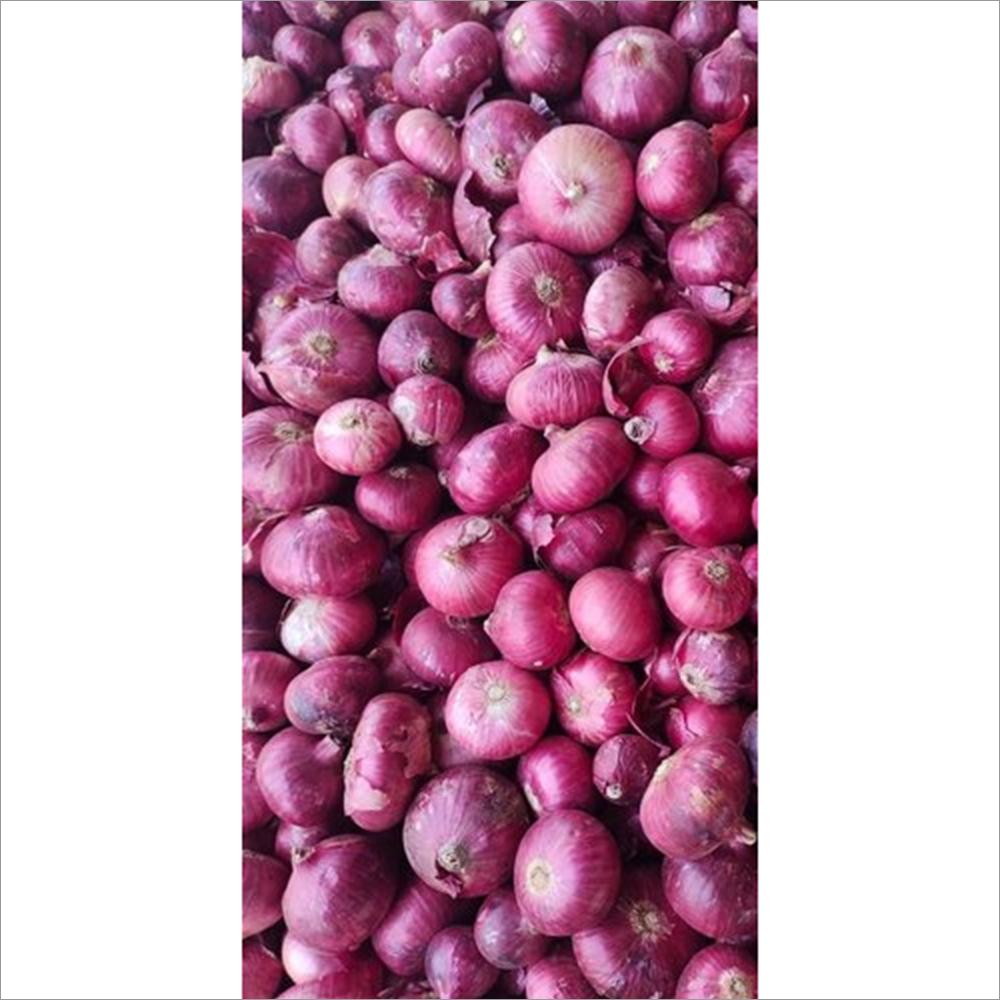 Organic Nashik Red Onion Seeds