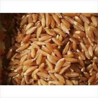 Organic Khapli Wheat Seeds