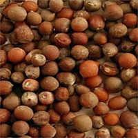 Organic Cauliflower Seeds