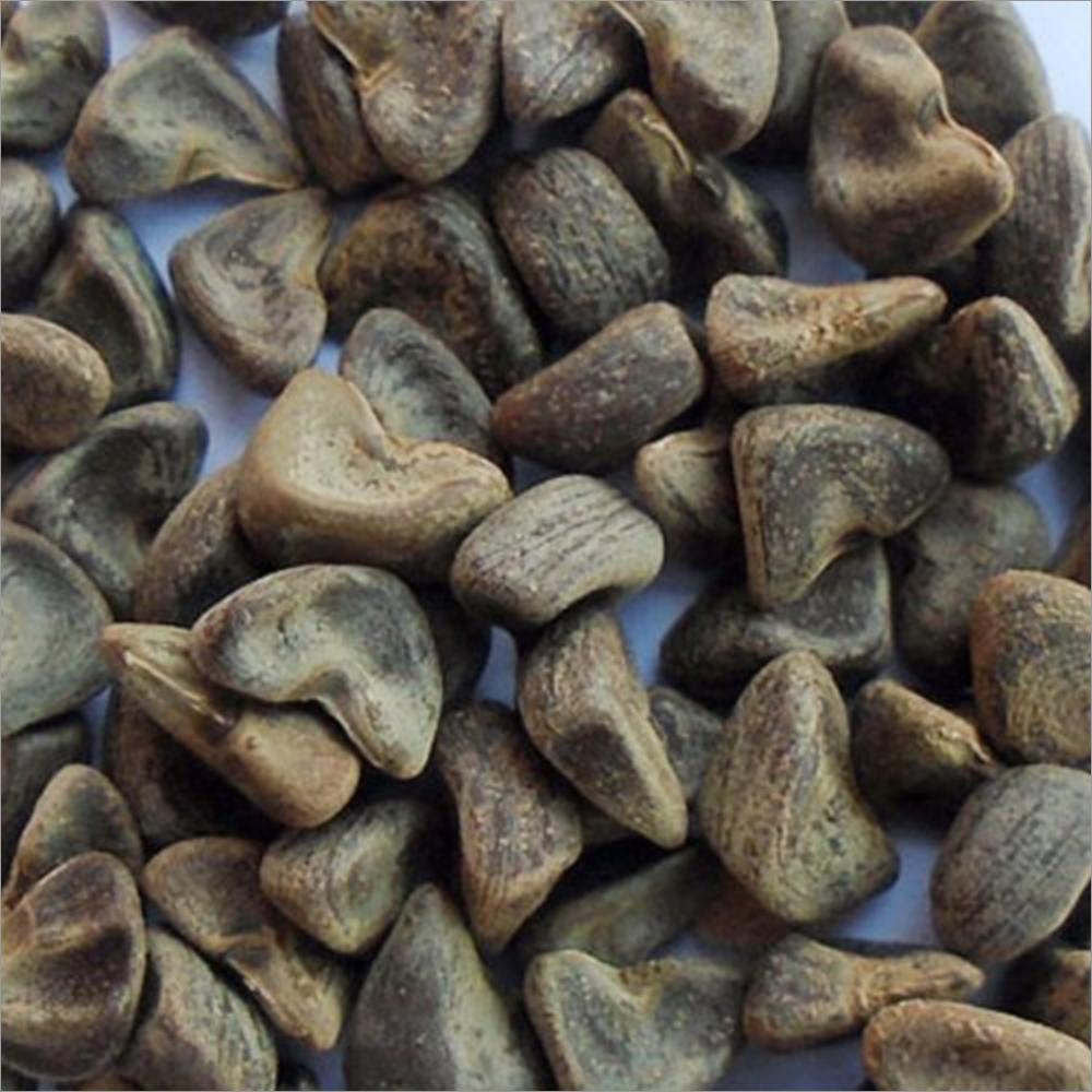 Organic Gongura Seeds