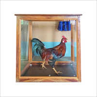 Taxidermy Rooster Bird