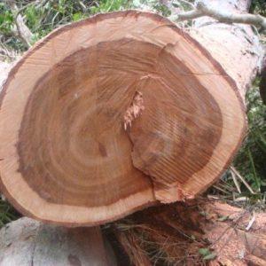 Maobi Wood Logs