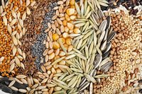 Cereals Products Testing Services