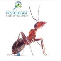 Ants Pest Control Services
