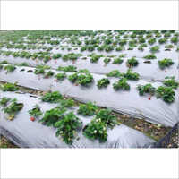 Agriculture Mulching Film