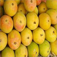 Fresh Banganapalli Mangoes