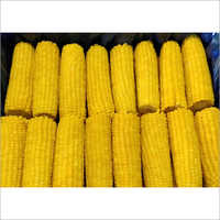 Froze IQF Corn On Cob